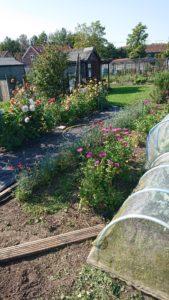 Longham Allotment Gardens