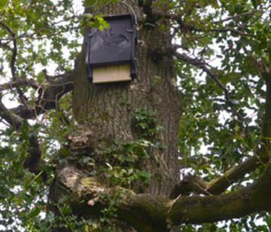 Bat Box 5